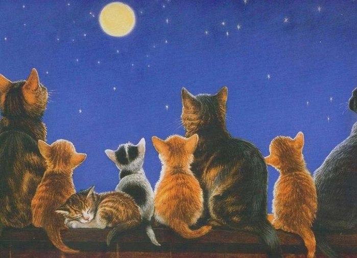 коты и кошки,луна и ночь (700x506, 77Kb)