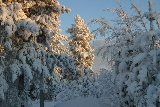 зима (525x350, 108Kb)