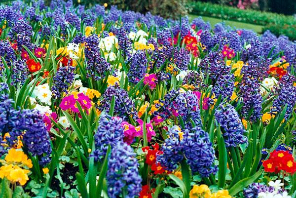 spring (600x401, 145Kb)