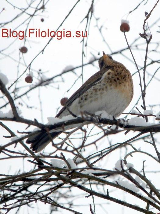 Птицы ищут корм на деревьях/3241858_zima17_1_ (525x700, 86Kb)