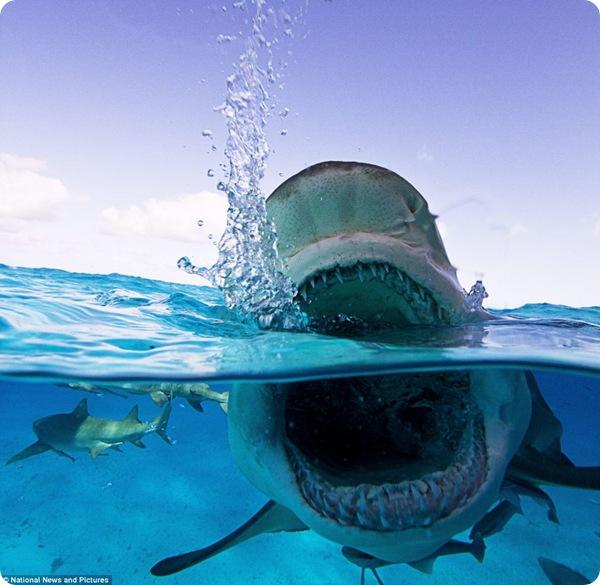 сколько лодок акул