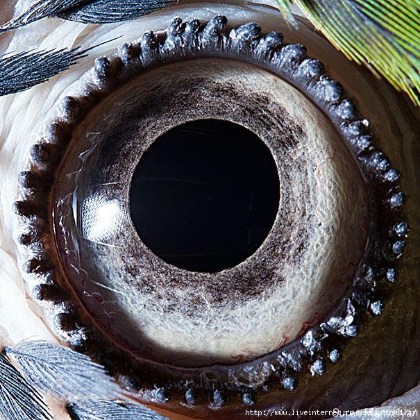 animal-eye-macro-suren-manvelyan-6 (605x605, 362Kb)
