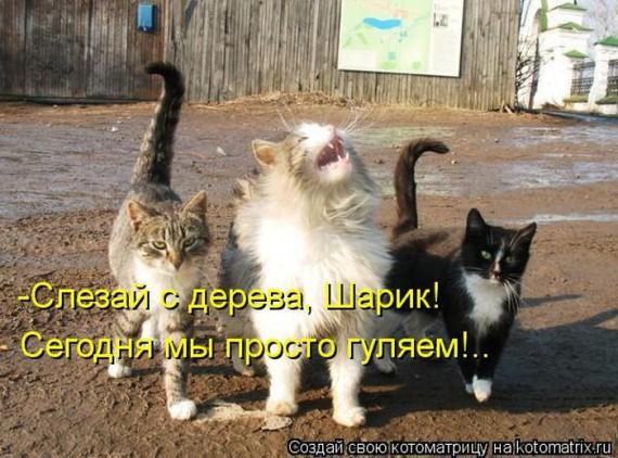1364243843_kot_16 (570x422, 86Kb)