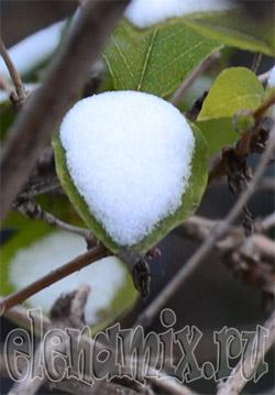 весенний снег