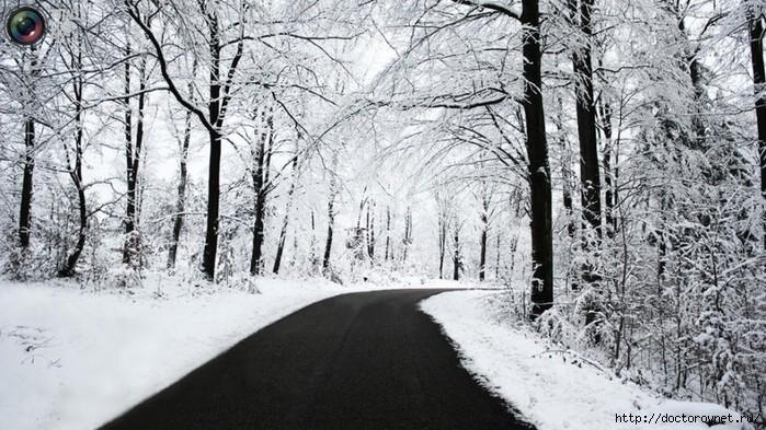 яркие краски мира ч-б зима (700x393, 255Kb)