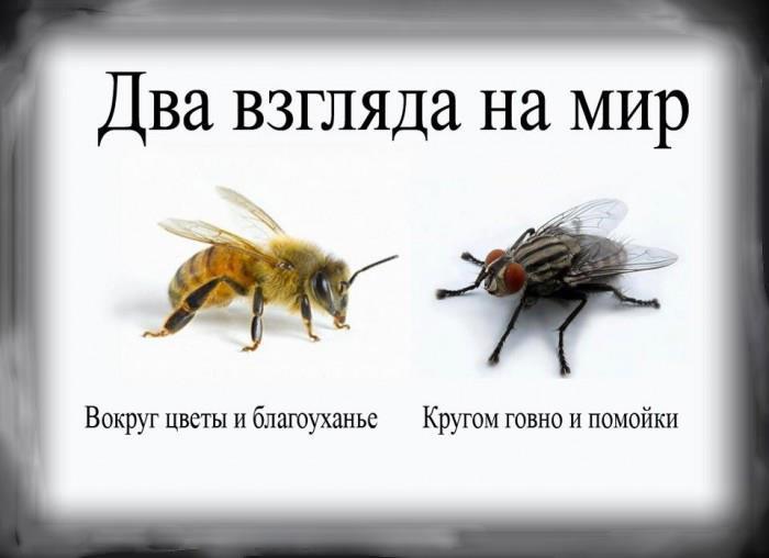 100109045_psihologiya_dva_vzglyada_na_mi
