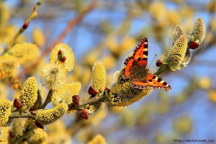 яркие краски мира бабочки весной (700x465, 162Kb)
