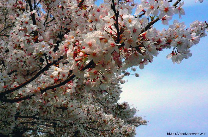яркие краски мира буйное цветение (700x462, 219Kb)