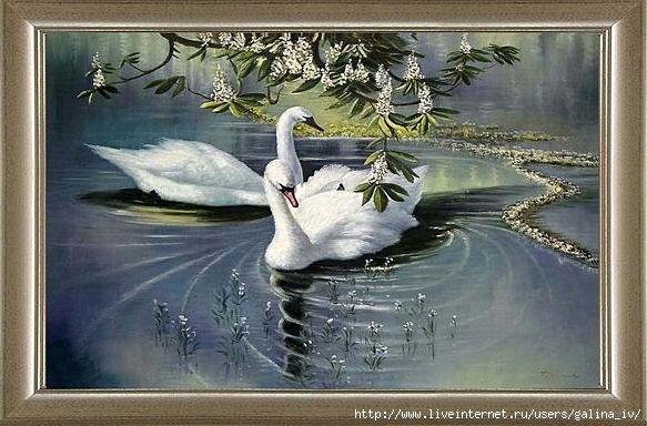 лебеди (583x384, 209Kb)