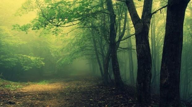 лес (620x348, 64Kb)