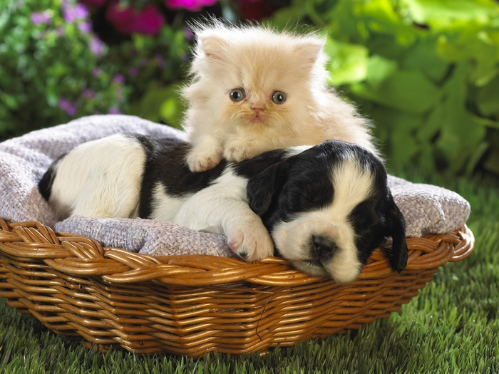 puppy-and-cat (700x525, 291Kb)