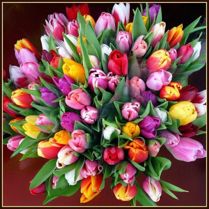 Тюльпаны красивая открытка 33
