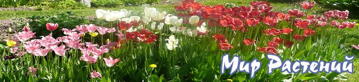 top_pavasaris (700x160, 206Kb)