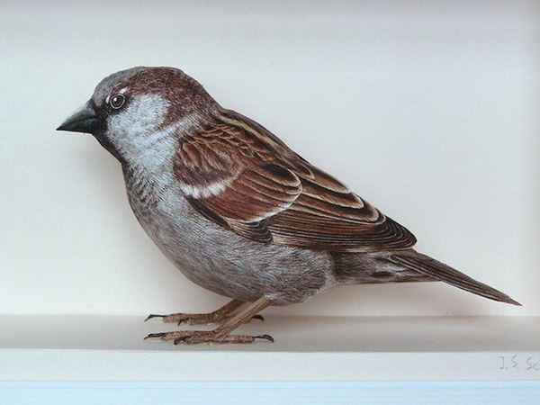 bird5 (600x450, 33Kb)