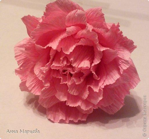 розы из гофробумаги и конфет (5) (514x480, 40Kb)