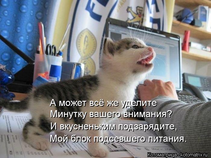 kotomatritsa__Y (700x525, 66Kb)
