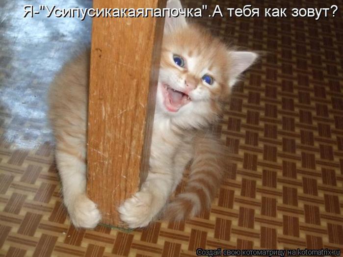 kotomatritsa_cb (700x524, 52Kb)