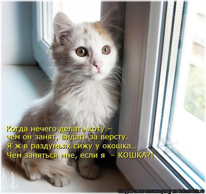 kotomatritsa_K_ (700x658, 64Kb)