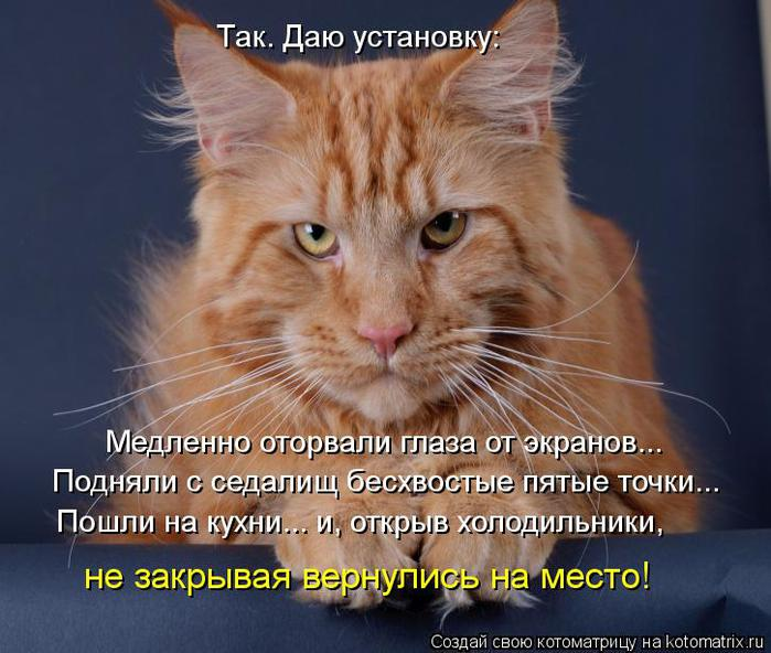kotomatritsa_oD (700x592, 66Kb)