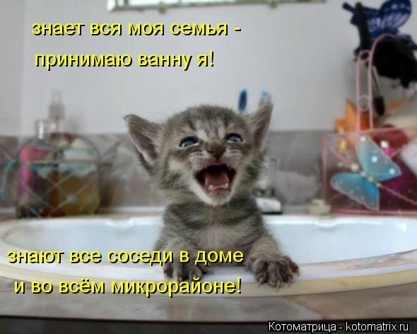 kotomatritsa_Q (590x472, 40Kb)