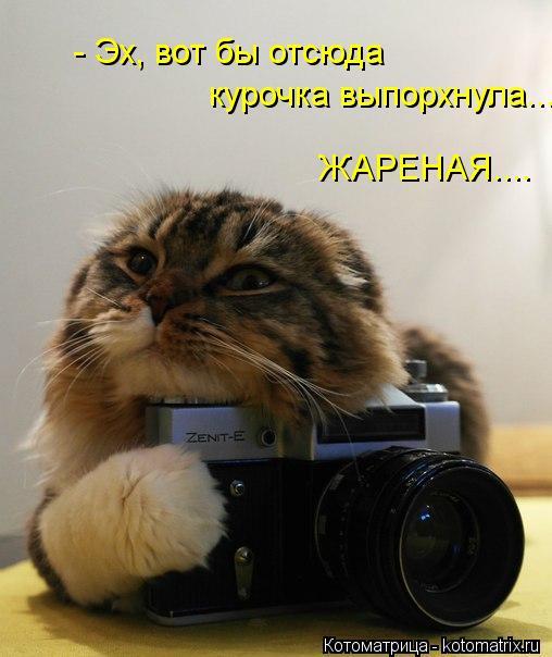 kotomatritsa_wC (508x604, 42Kb)