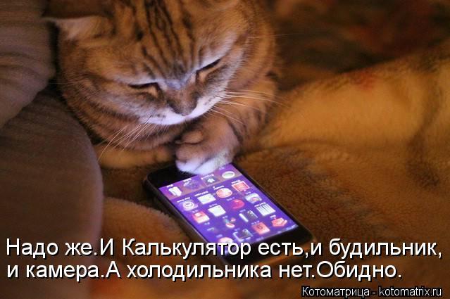 kotomatritsa_z (639x425, 45Kb)