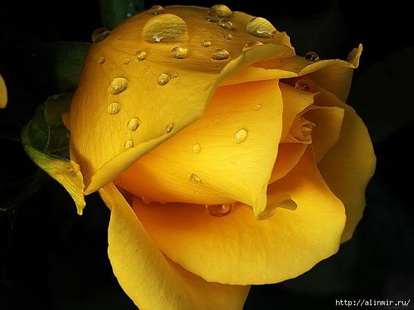 цветы  (600x450, 100Kb)