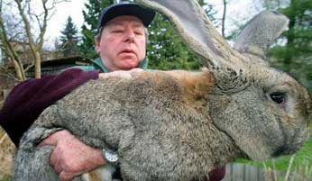 кролик (346x201, 14Kb)