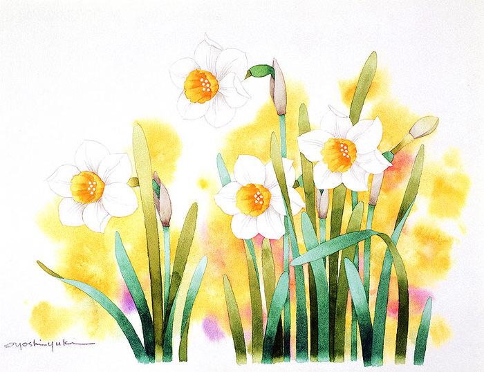 цветочные акварели Ибараги Йосиюки 4 (700x538, 113Kb)