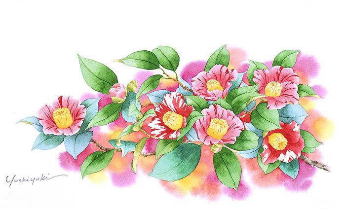 цветочные акварели Ибараги Йосиюки 5 (700x424, 91Kb)