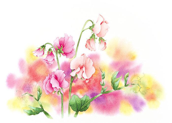 цветочные акварели Ибараги Йосиюки 7 (700x499, 79Kb)
