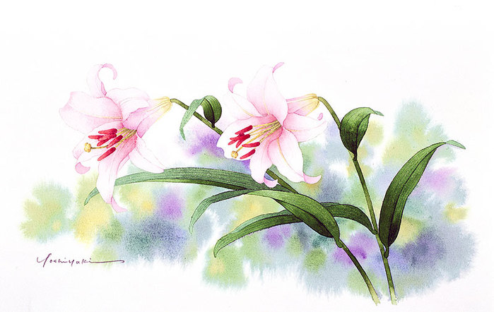 цветочные акварели Ибараги Йосиюки 14 (700x442, 69Kb)