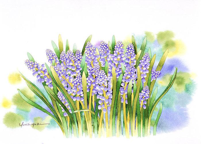 цветочные акварели Ибараги Йосиюки 15 (700x501, 129Kb)