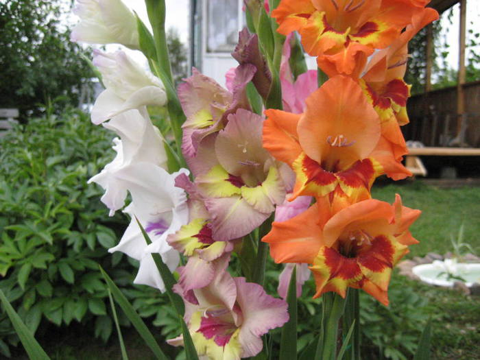 цветы-2011-111 (700x525, 60Kb)