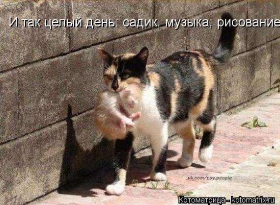 1366975238_kotomatritsa_ka (570x418, 87Kb)
