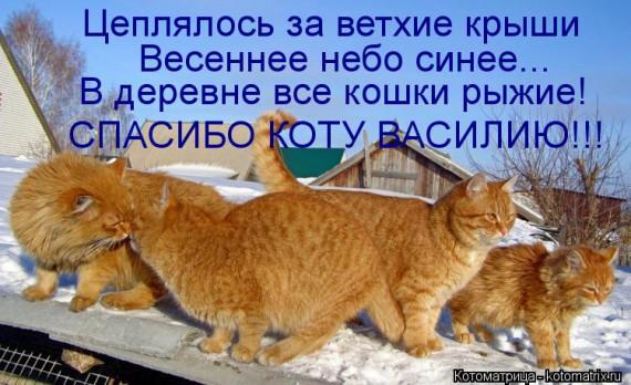 1366975345_kotomatritsa_y5 (570x348, 78Kb)