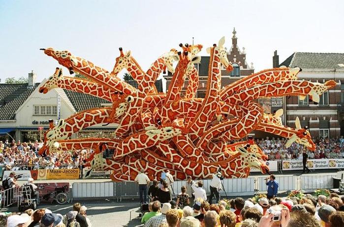 парад цветов в Зюндерте фото 1 (700x463, 175Kb)