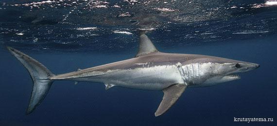 фотографии акул (570x261, 46Kb)