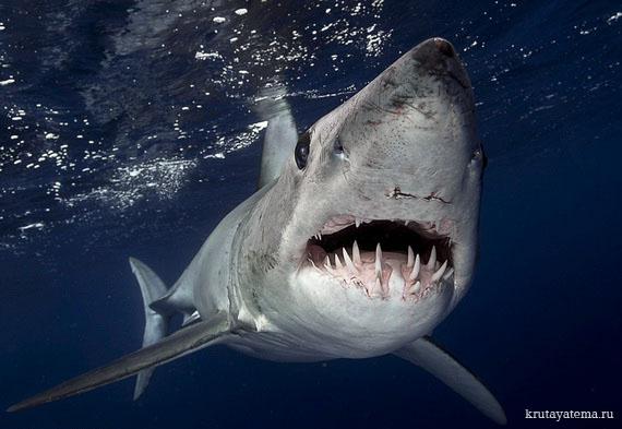 фотографии акул 2 (570x393, 67Kb)