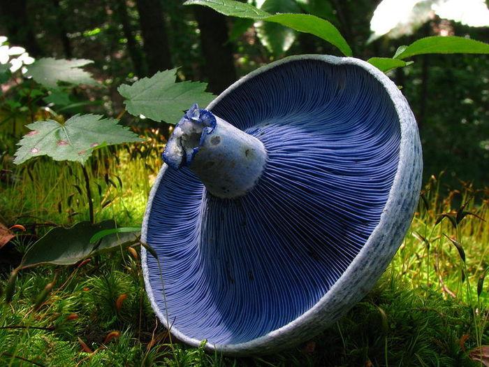 необычные грибы фото (700x525, 99Kb)