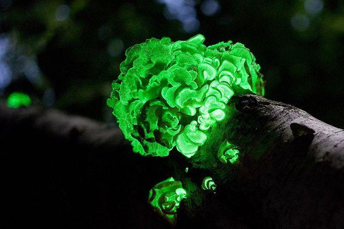 необычные грибы фото 2 (700x466, 52Kb)