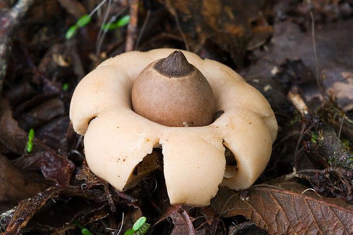 необычные грибы фото 4 (700x466, 71Kb)