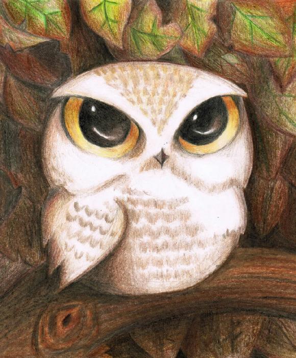 Аниме сова рисунки