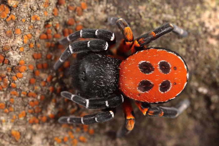 макро фото насекомых 2 (700x466, 107Kb)