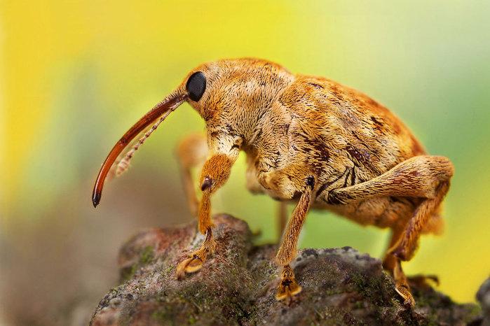 макро фото насекомых 4 (700x466, 86Kb)