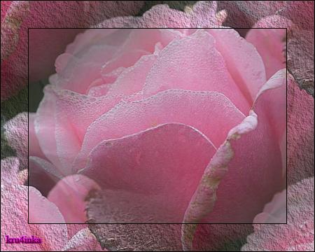 Роза (450x360, 315Kb)