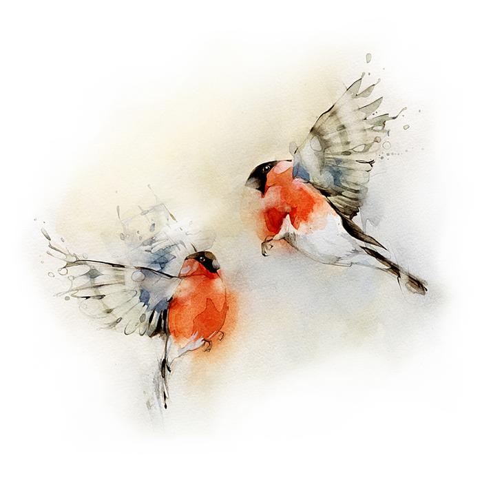 Bullfinches2 (700x700, 277Kb)