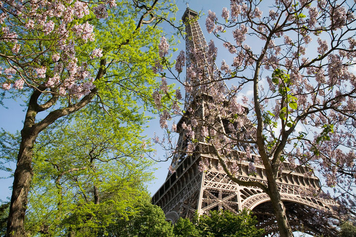 Paris_-_The_Eiffel_Tower_in_spring_-_2307 (700x466, 674Kb)