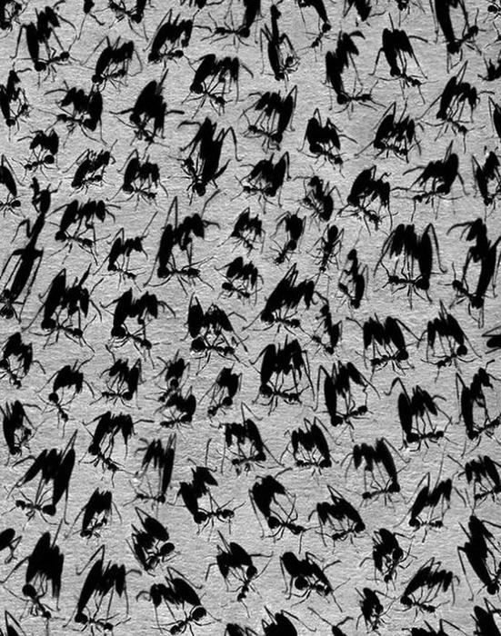 28 Иероглифы (551x700, 218Kb)