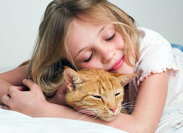 Коты защитят детей от аллергии. Здоровье. женский журнал woman.wow.ua - женский журнал, мода, секси, фото